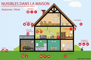 nuisibles-hiver-maison-info